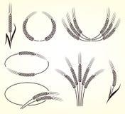 Oreilles d'ensemble de blé et de seigle Vecteur Photos stock