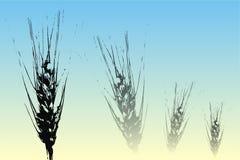 Oreilles de blé Illustration de Vecteur