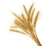 Oreilles de blé Photographie stock libre de droits