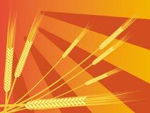 Oreilles de blé Image stock