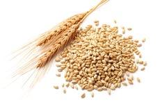 Oreilles de blé avec des grains de froment Photographie stock