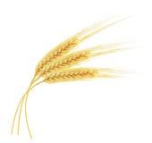 Oreilles de blé d'isolement sur le fond blanc Images libres de droits
