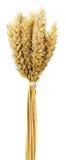 Oreilles de blé d'isolement sur le fond blanc Photo stock