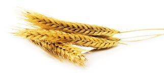 Oreilles de blé d'isolement sur le fond blanc Image libre de droits