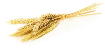 Oreilles de blé d'isolement sur le fond blanc Image stock