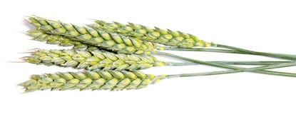 Oreilles de blé d'isolement sur le fond blanc comme design d'emballage Images libres de droits