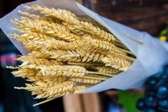 Oreilles de blé en livre blanc photographie stock