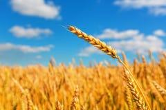 Oreilles de blé et ciel nuageux image stock