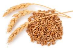 Oreilles de blé et des grains de blé image libre de droits