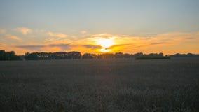 Oreilles de blé ondulant dans le vent au temps de coucher du soleil Zone de blé Photo libre de droits