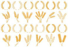 Oreilles de blé ou d'orge Grain de blé de récolte, tige de riz de croissance et ensemble d'isolement de vecteur de céréales panif illustration stock