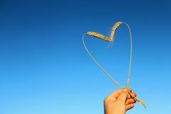 Oreilles de blé sous forme de coeur sur le fond bleu Photographie stock