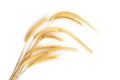 Oreilles de blé sur le fond blanc photos stock