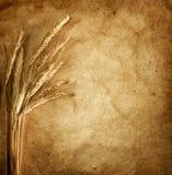 Oreilles de blé sur le fond de cru image libre de droits