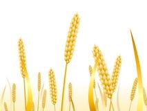 Oreilles de bl? sur un fond blanc pour le paysage illustration libre de droits