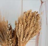 Oreilles de différents types de céréales : blé, avoine, seigle image stock