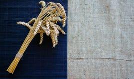 Oreilles de l'élevage de seigle et de blé Photo stock