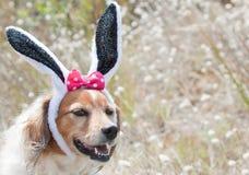 Oreilles de lapins de Pâques Image stock