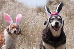 Oreilles de lapins de Pâques Photo libre de droits