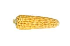 Oreilles de maïs mûr Photos stock
