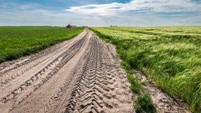Oreilles renversantes de grain sur le champ vert en été images stock