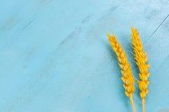 Oreilles sèches de blé sur le fond bleu Photo stock