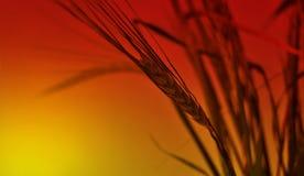 Oreilles sur le fond du ciel rouge. Photo libre de droits