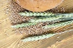 Oreilles vertes de blé Image libre de droits