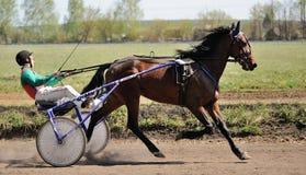 Orel, Russia - April 30, 2017: Harness racing. Brown horse runni Royalty Free Stock Photo