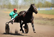 Orel, Russia - April 30, 2017: Harness racing. Brown horse runni Royalty Free Stock Photos