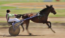 Orel, Russia - April 30, 2017: Harness racing. Sorrel racing hor Royalty Free Stock Photo