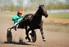 Orel Ryssland - April 30, 2017: Travsport Brun hästrunni Royaltyfria Foton