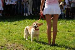 Orel Ryssland, Augusti 01, 2015: Mumu Fest, Turgenevs berättelsekonst-f Royaltyfria Bilder