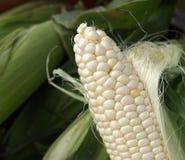 Orelha de milho Foto de Stock