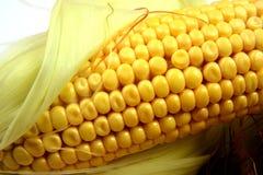 Orelha de milho, close up com espaço para a cópia foto de stock royalty free