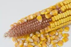 Orelha de milho com as sementes removidas Fotos de Stock Royalty Free