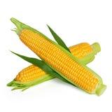 Orelha de milho com folha Imagem de Stock