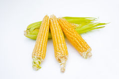 Orelha de milho com folhas Fotos de Stock