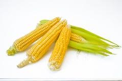 Orelha de milho com folhas fotografia de stock