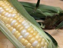 orelha de milho Fresco-shucked fotografia de stock