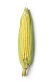 Orelha de milho isolada Imagem de Stock Royalty Free