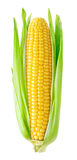 Orelha de milho isolada fotografia de stock royalty free