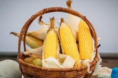 Orelha de milho, núcleos amarelos de revelação, foto do milho em uma cesta de vime Imagens de Stock