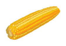 Orelha de milho no branco, vetor Imagens de Stock