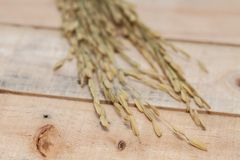 Orelha do arroz no saco Fotografia de Stock Royalty Free