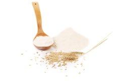 Orelha do trigo da farinha e colher da madeira foto de stock