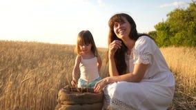 Orelha do trigo na mão de uma criança a mãe e pouca criança estão jogando com grão no saco em um campo de trigo feliz vídeos de arquivo