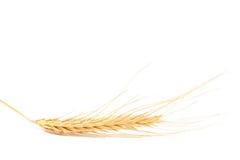 Orelha do trigo no fundo branco Fotografia de Stock