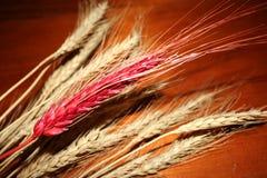 Orelha vermelha do trigo em um fundo de madeira Fotos de Stock Royalty Free