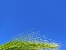 Orelhas Imagem de Stock